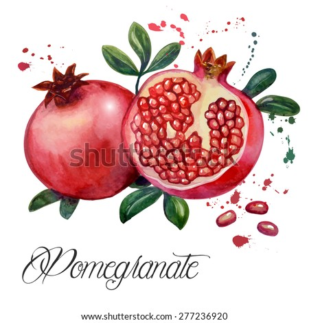 Fruit pomegranate - illustration. Hand drawn watercolor painting on white background. - stock vector