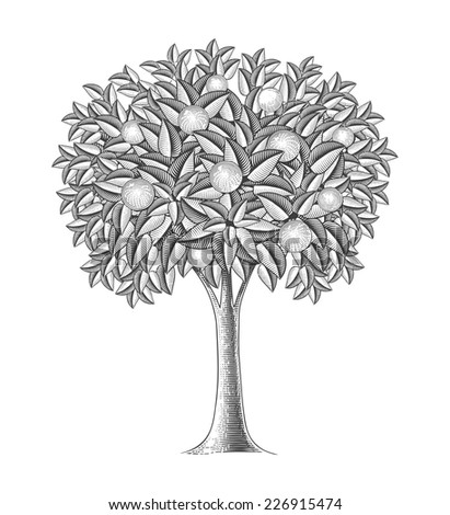 Fruit tree in engraving style.  Vector illustration, isolated, grouped, transparent background - stock vector