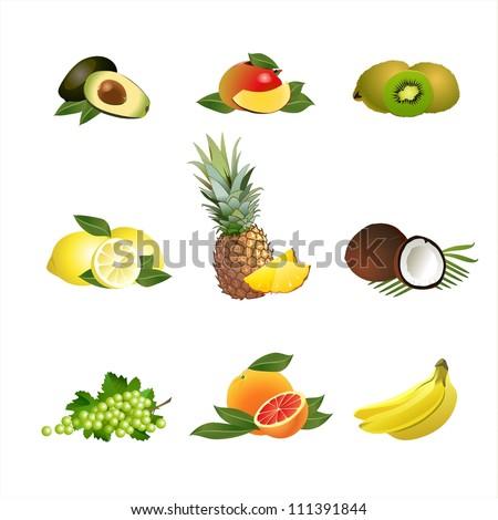 Fruits. Vector. Grapes, kiwi, grapefruit, banana, pineapple, lemon, coconut, mango, avocado - stock vector