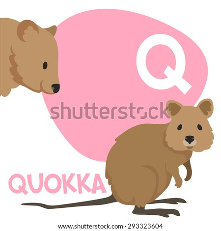 animal with letter q quokka stock images royalty free images amp vectors 4782