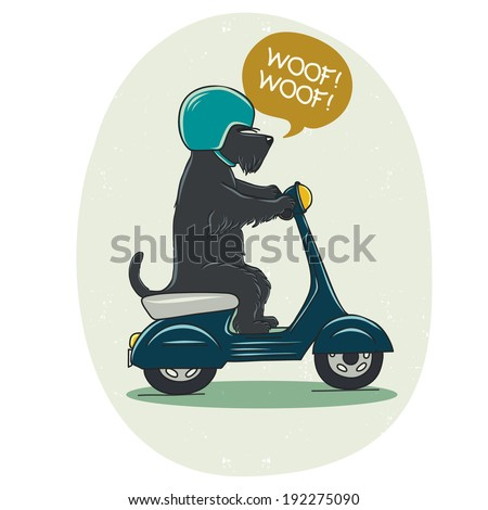 Funny illustration of a cute Scottish terrier riding old school blue scooter. Hand drawn cartoon dog on a motorbike. - stock vector
