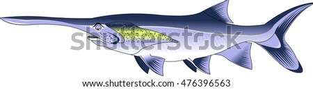 funny paddlefish. Editable vector illustration isolated on white background