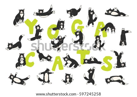 cat positions stock images royaltyfree images  vectors