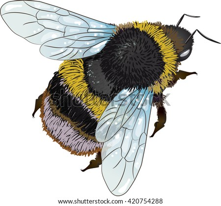 Bumblebee Stock Photos, Royalty-Free Images & Vectors ...