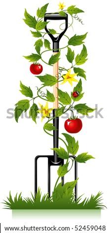 garden fork, tools for the gardener and tomato - stock vector