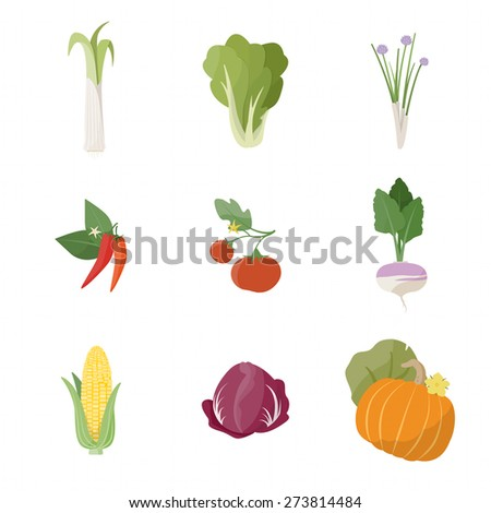 Garden fresh vegetables set on white background, including leek, lettuce, chives, chili pepper, tomato, turnip, corn, chicory and pumpkin - stock vector