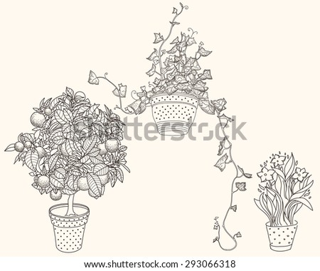 Garden set with 3 plants in flowerpot: bluebell, narcissus and ivy. Design template in vintage style like engrave. Vintage style. 3 in 1 - stock vector