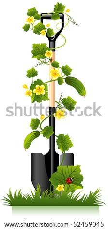 garden spade, tools for the gardener and cucumber - stock vector