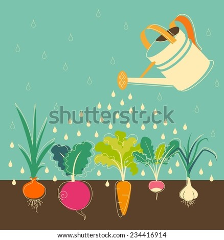 Garden watering concept with root veggies - stock vector