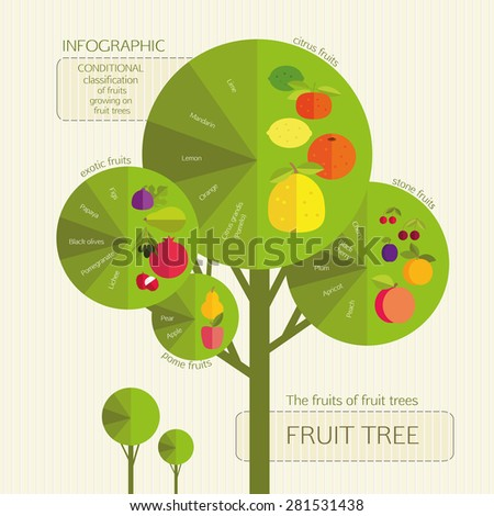 Gardening. Conditional classification of fruits growing on fruit trees. Infographic. - stock vector