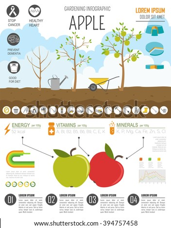 Gardening work, farming infographic. Apple. Graphic template. Flat style design. Vector illustration - stock vector