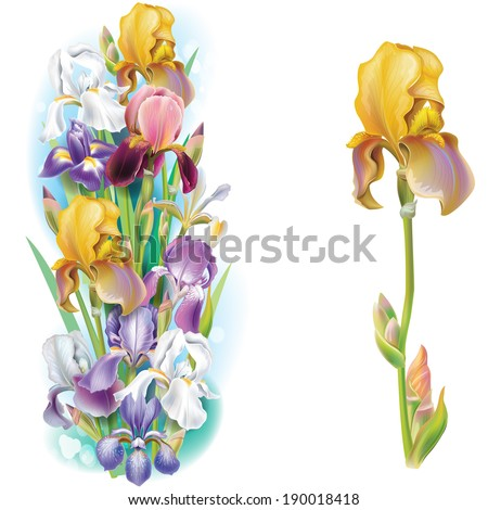 Garlands of Iris flowers - stock vector