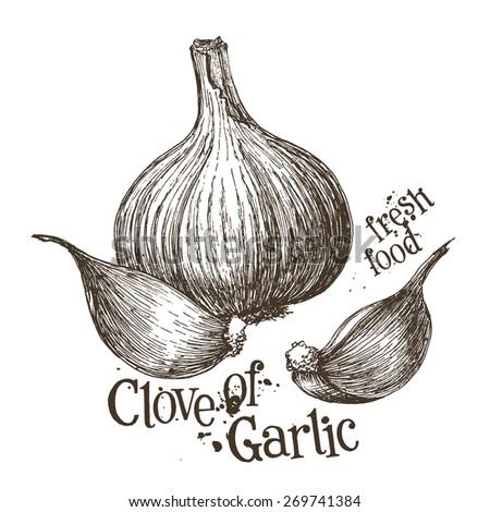 garlic vector logo design template. fresh vegetables, food or cooking icon. - stock vector