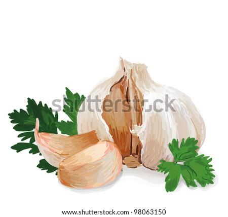 Garlic with parsley - stock vector