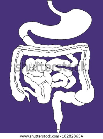 Gastrointestinal tract on purple background