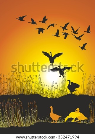 Geese on the shore of a lake at sunset - stock vector