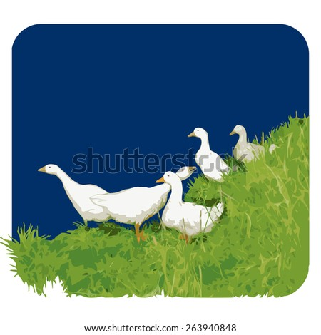 Geese. Vector illustration. 2  - stock vector