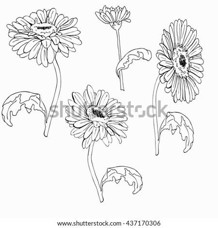 Gerbera Daisy Line Drawing Gerbera Daisy Chamomil...