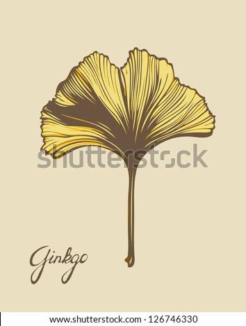 Ginkgo Biloba Beautiful Leaf Vector Color Version