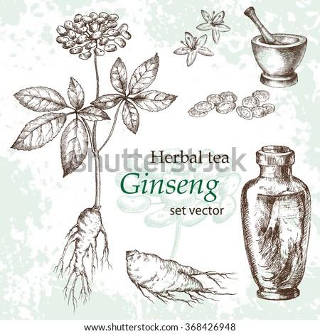 Ginseng  botanical drawing. Herbal tea  set. Hand drawn.  Medicinal plant. Grange background.
