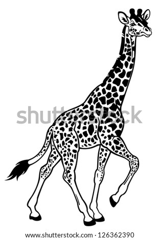 giraffe,africa animal,black and white side view picture,vector illustration