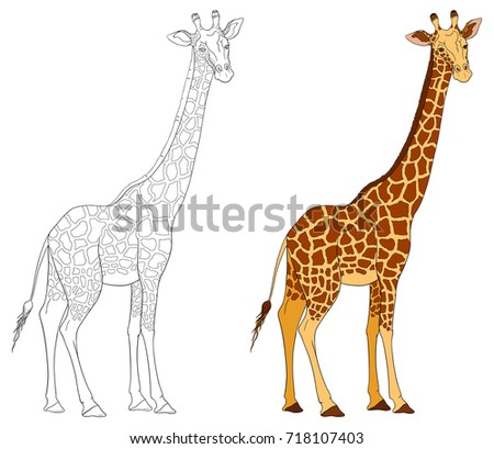 Giraffe Coloring Book Isolated On White Stock Vector 718107403 ...