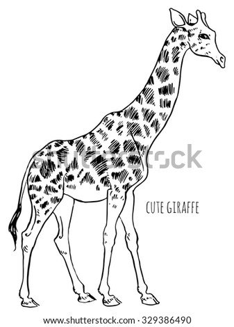 giraffe goes - vector hand-drawing sketch