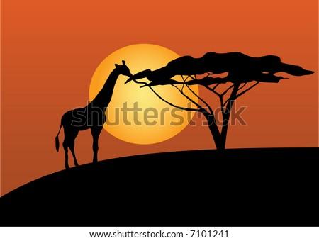 Giraffe having dinner in the sunset - stock vector