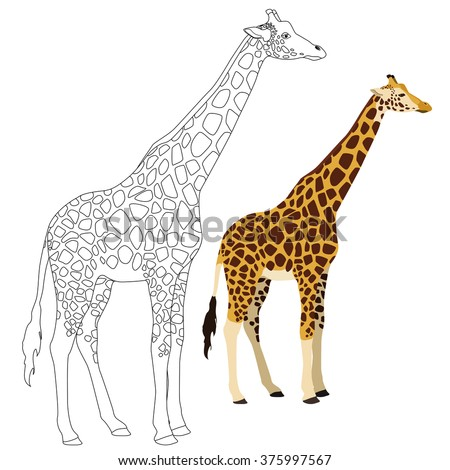 Giraffe illustration for coloring page.