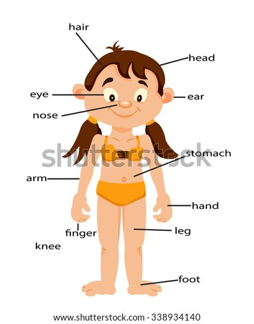 Girl Signed Body Parts English Learn Stock Photo Photo Vector