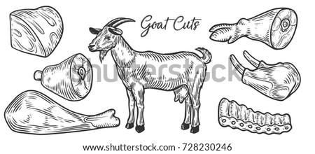 Goat Meat Cuts Parts Chop Hand Drawn Butchery Vector Set Engraved Collection
