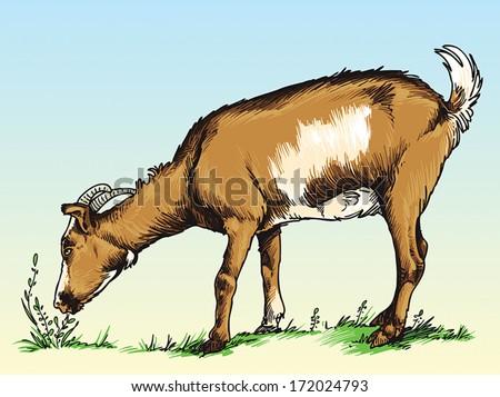 goat stock vectors images amp vector art shutterstock