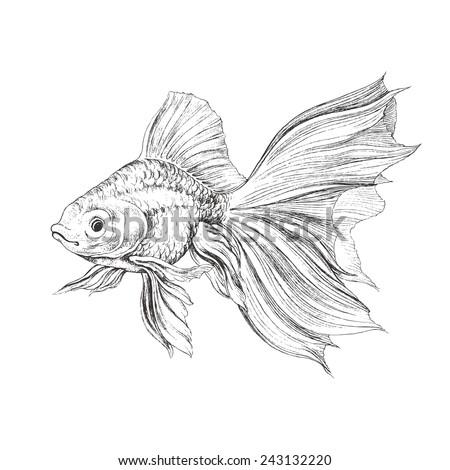 Gold fish, hand drawn illustration. - stock vector