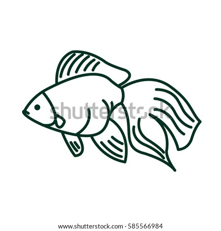 Gold Fish In Line Style Carassius Auratus Isolated Freshwater Aquarium On White Background