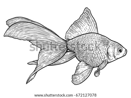 goldfish illustration drawing engraving ink line art vector