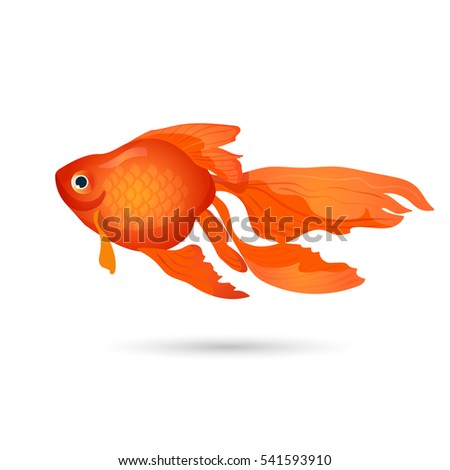 Goldfish isolated on white. Small red aquarium fish. Aquatic realistic character, tank habitat. Underwater goldenfish in flat style design. Elegant home pet. Freshwater fish of carp family. Vector