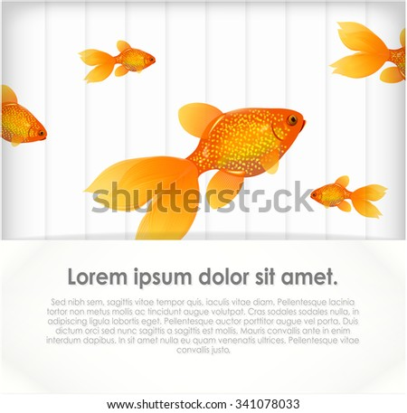 Goldfish on grey background