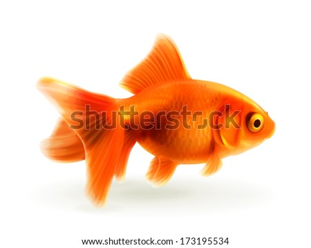 Goldfish, photo realistic vector illustration - stock vector