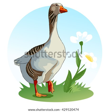 Goose stands on a meadow with flowers. Waterfowl. Wildflowers chamomile. Children's illustration. Vector. - stock vector