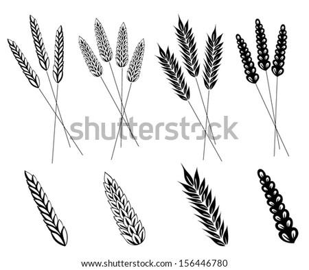 Grain, corn vector set, design elements. - stock vector