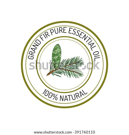 Grand fir, essential oil label, aromatic plant. Vector illustration