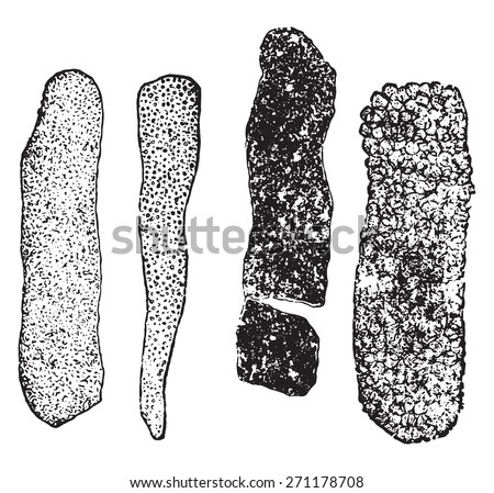 Frog Dissection besides Search together with 60362 together with 10 further Search. on diagram of intestine structure