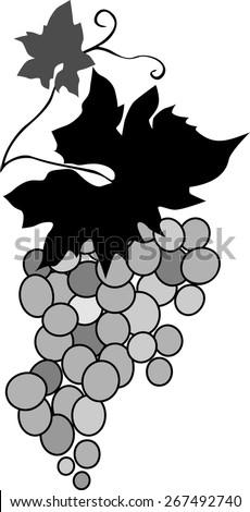 Grape vine - stock vector