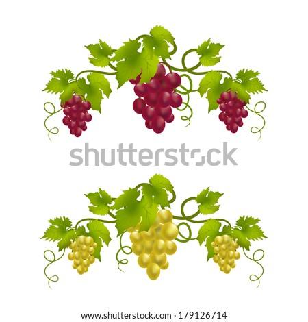 grape vine monogram.  vector illustration - stock vector