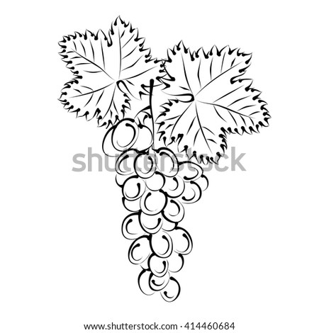 Grape vine with bunch of grapes. Hand drawn vector illustration (silhouette sketch). - stock vector