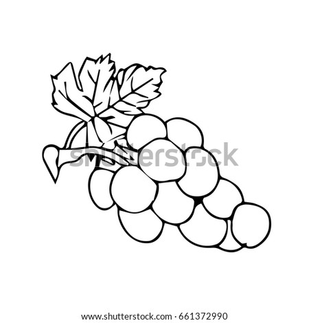 Grapes On A White Background Vector Illustration Bunch Of Wine With Leaf Flat Color