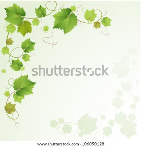 Grapes vine background - stock vector