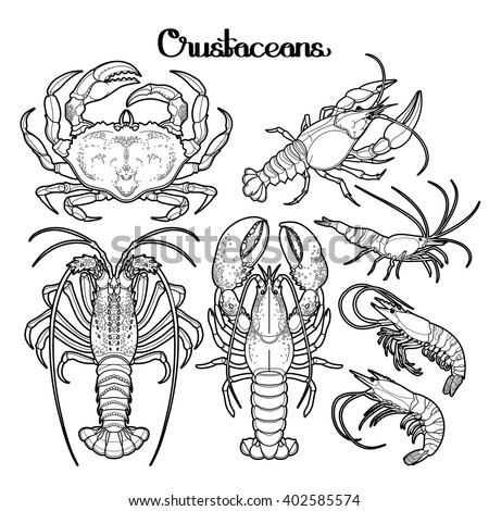 seafood coloring pages - photo#18