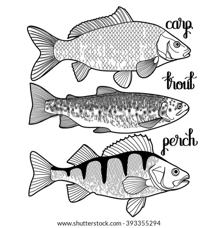 graphic fish collection drawn in line art style carp trout and perch for seafood