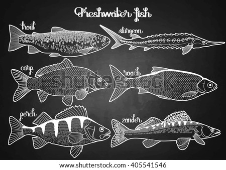 Line Art Illustration Style : Graphic fish collection drawn line art stock vector 405541546
